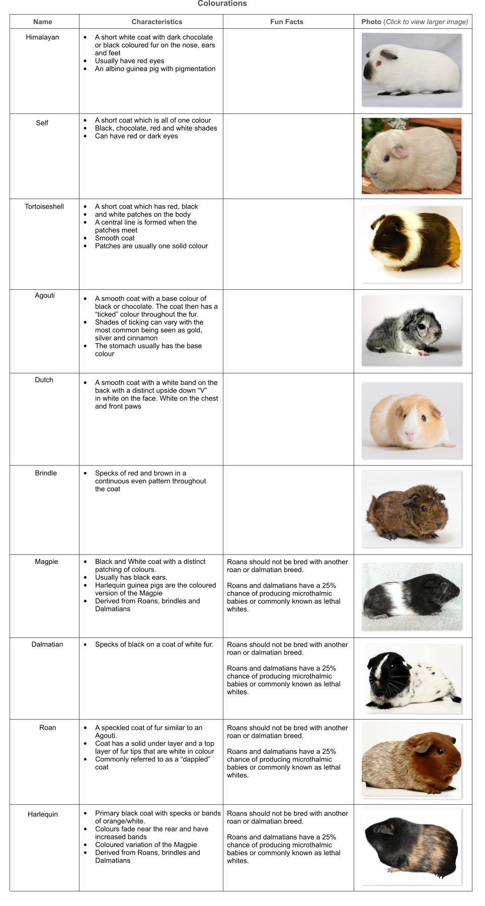 Dwarf Guinea Pig Names Choice Image Diagram Writing