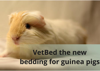 VetBed the new  bedding for guinea pigs